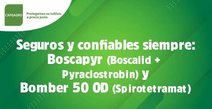 Seguros y confiables siempre: Boscapyr (Boscalid + Pyraclostrobin) y Bomber 150 OD (Spirotetramat)
